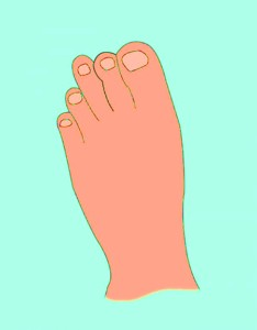 Types Of Toes